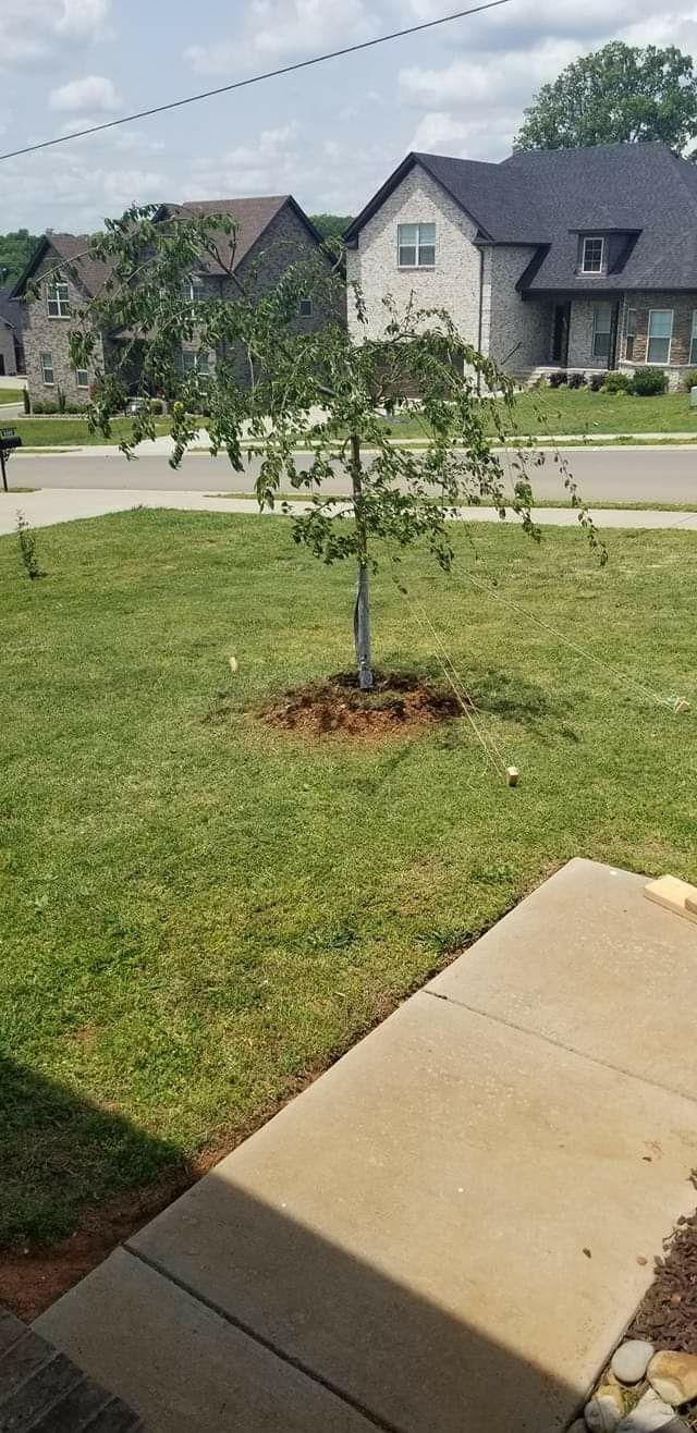 Tree Planting - Smyrna 2020