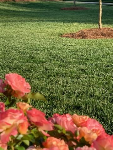 replacing grass