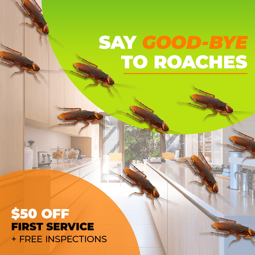 $50 off initial service