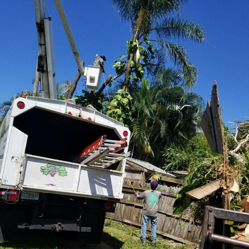 King Essential Yard Services Tree Trimming