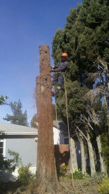 Avatar for Nery's Tree Service & Hauling North Hills, CA Thumbtack