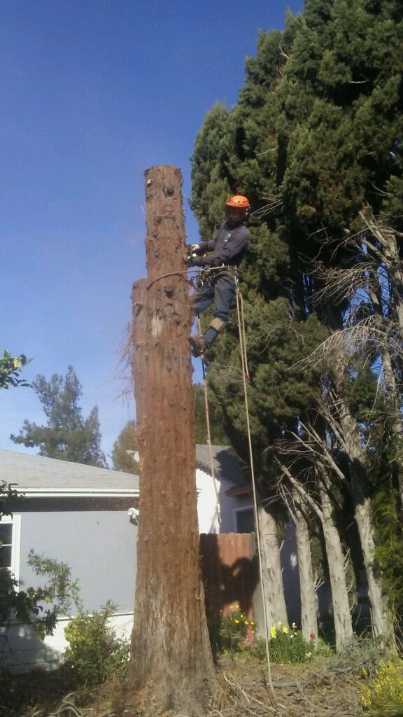 Nery's Tree Service & Hauling