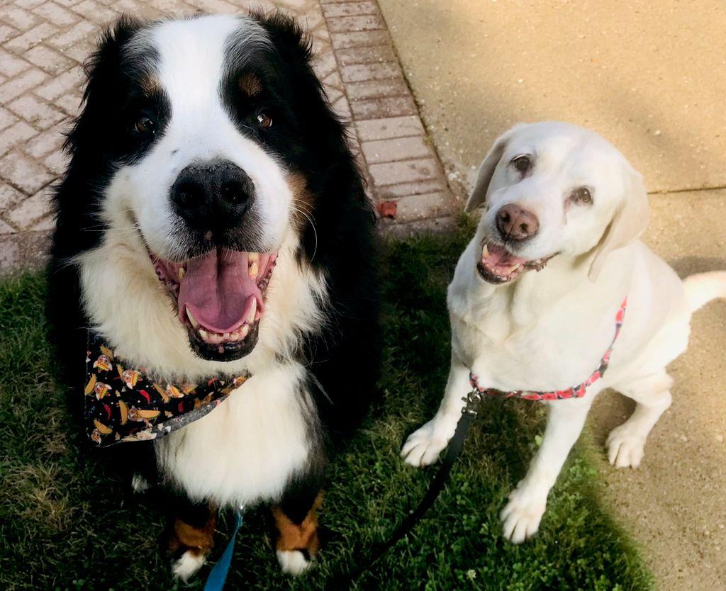Training, Walks & Petsits by Paula, LLC