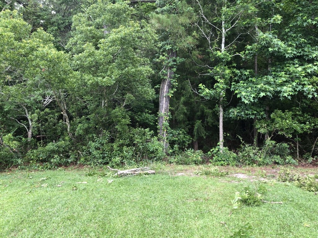 Landscaping - Brush and tree removal