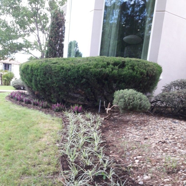 David Lawn Care and Janitorial Services