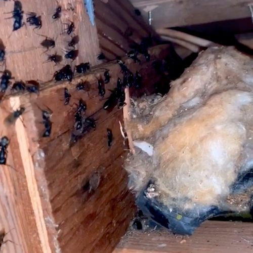 Call us today if you're having a carpenter ant issue they are a wood destroying insect