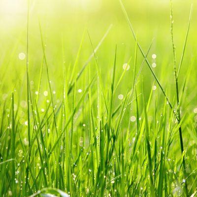 Avatar for Gabriel's Landscape Irrigation Repair