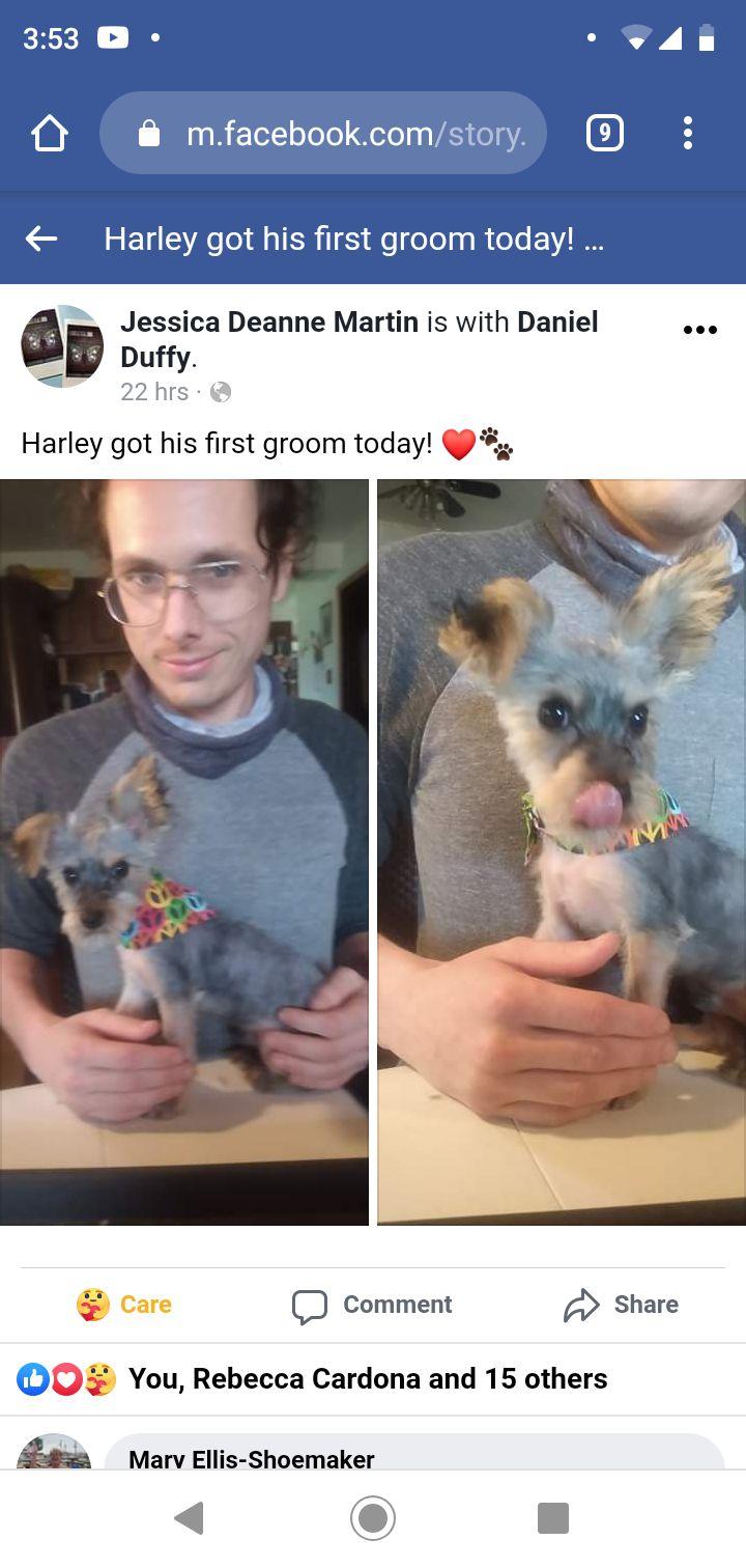 Harley's first haircut