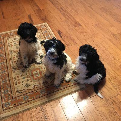 Avatar for Focused Choice Dog Training, LLC
