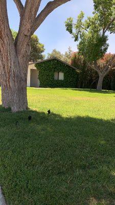 Avatar for Ohana Garden Las Vegas, NV Thumbtack