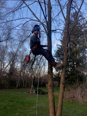 Avatar for Mild Tree Care