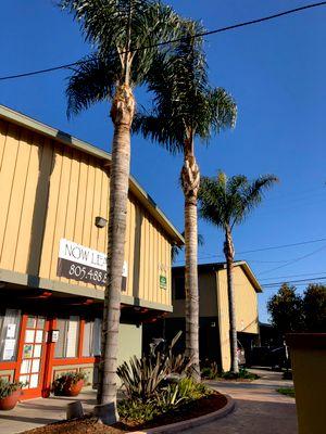 Avatar for Pedro Lopez & sons maintenance & landscaping Oxnard, CA Thumbtack