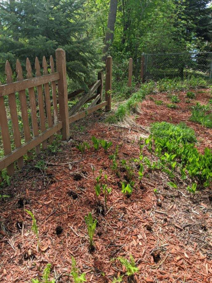 Fence and Gate Repairs - Maple Grove 2020