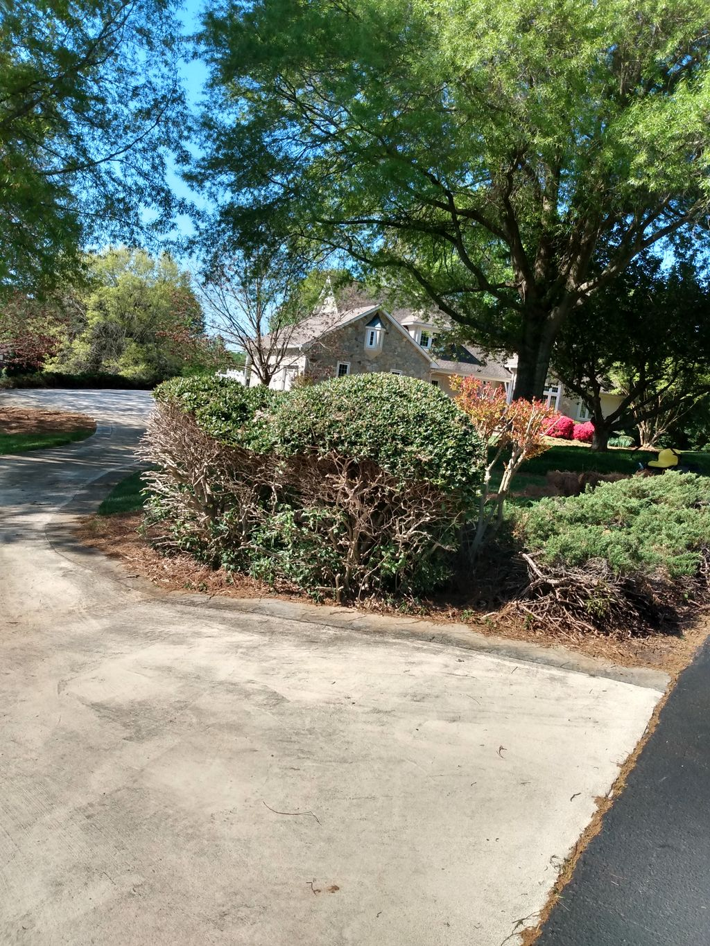Removal of old shrubs& replacing withlirope, lollies, and mums
