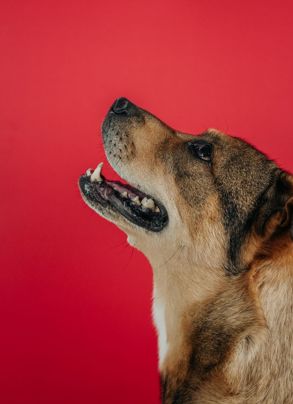 Pet Portrait Shoot