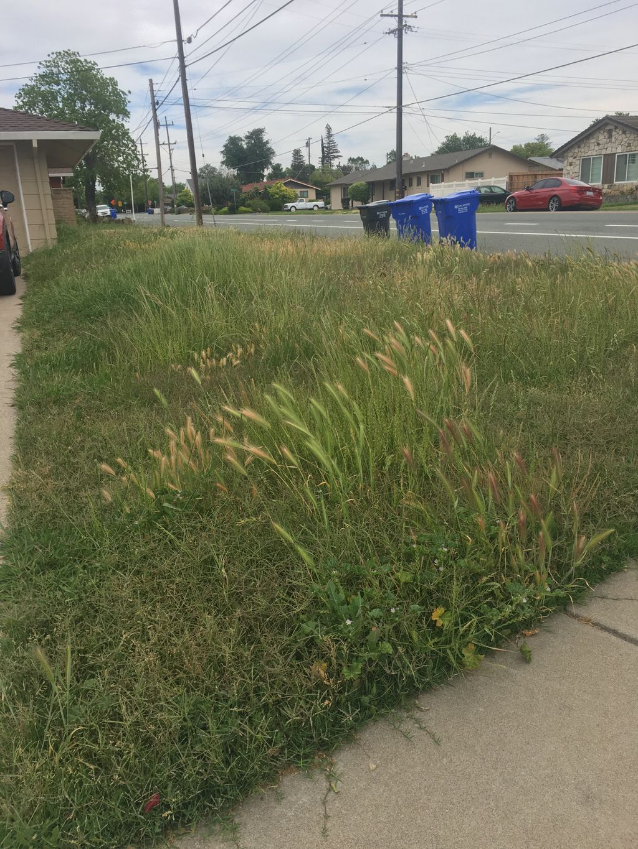 Yard Clean Up & Maintenance