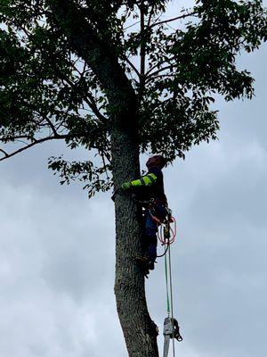 Avatar for Sosa tree service