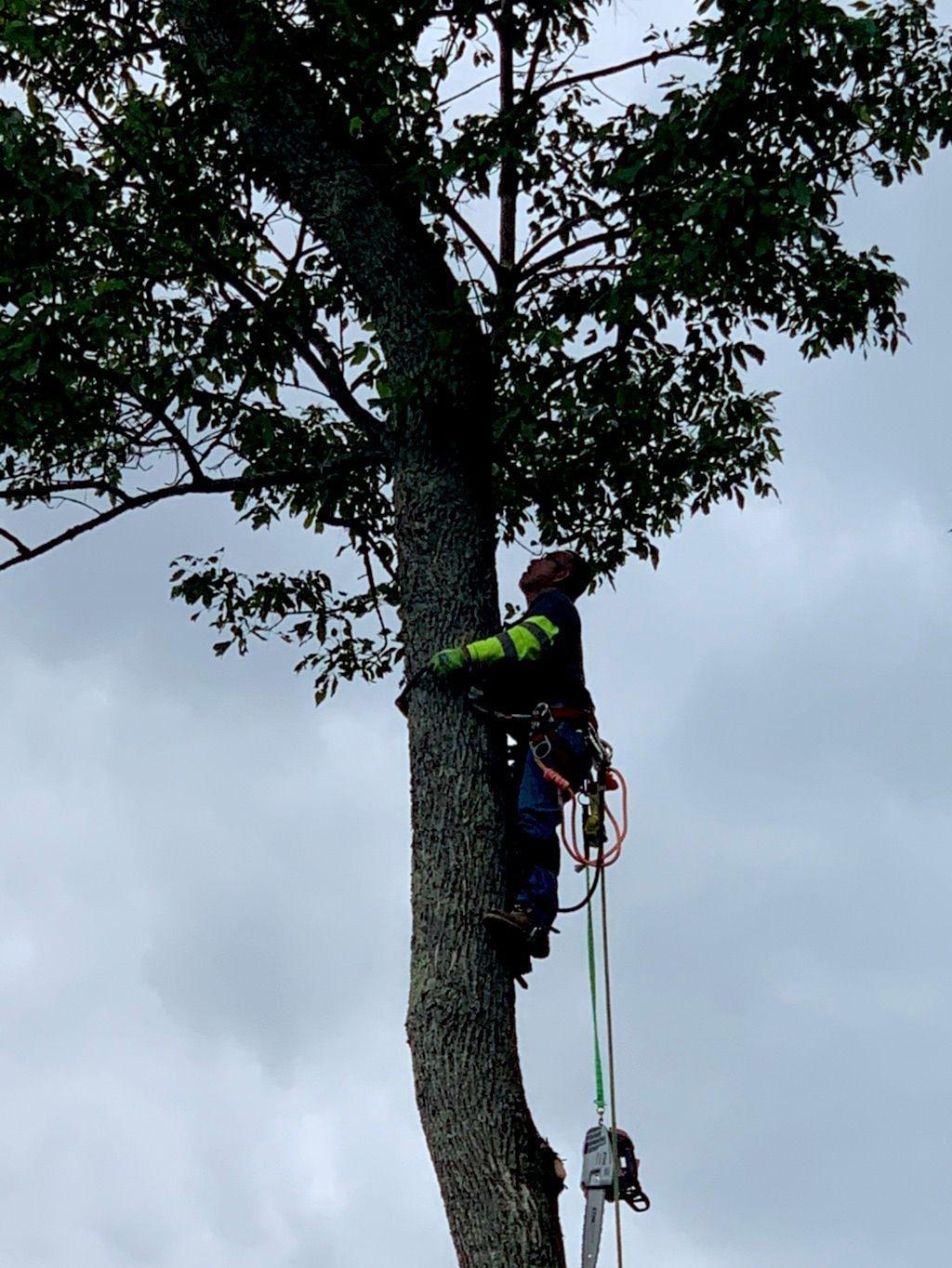 Sosa tree service