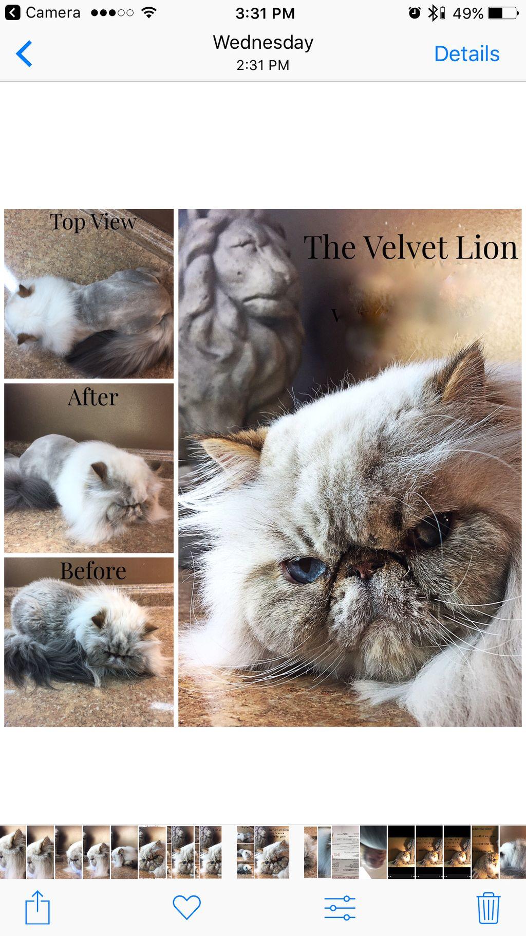 The Velvet Cut
