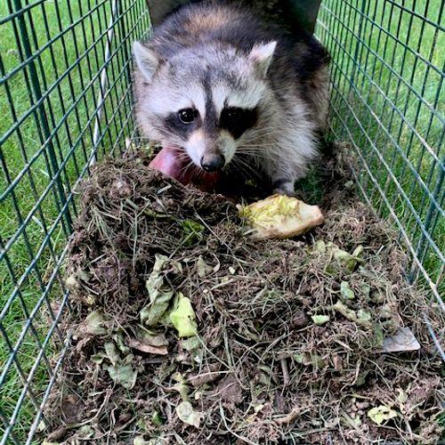 Trap Rentals/Animal Pick Ups