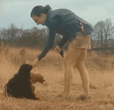 Rewards are so important for dogs to be engaged and happy to train.
