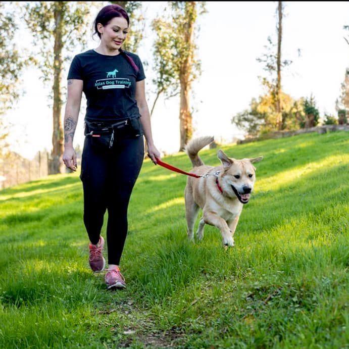 Atlas Dog Training