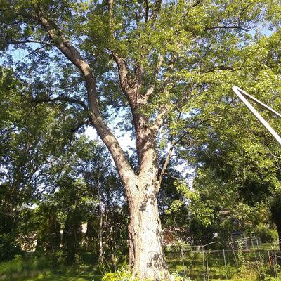Avatar for Green Harmony Tree Care