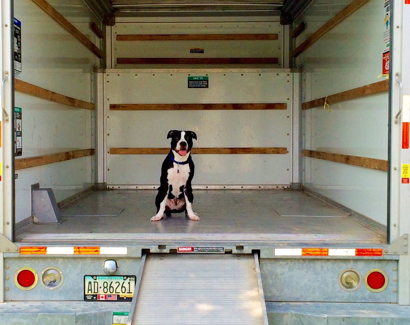 dog in empty moving truck