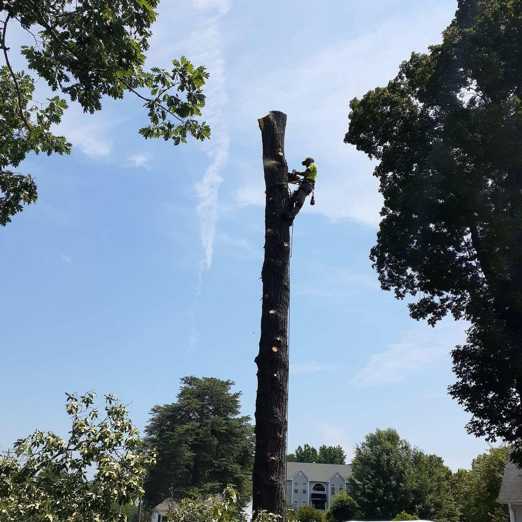 A & B Tree Expert