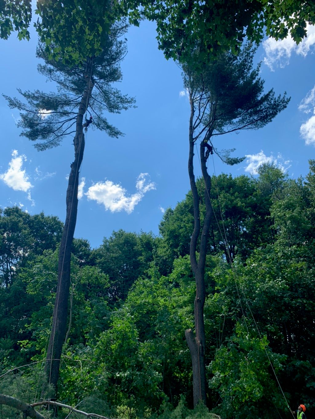 GBE Guifarro tree services