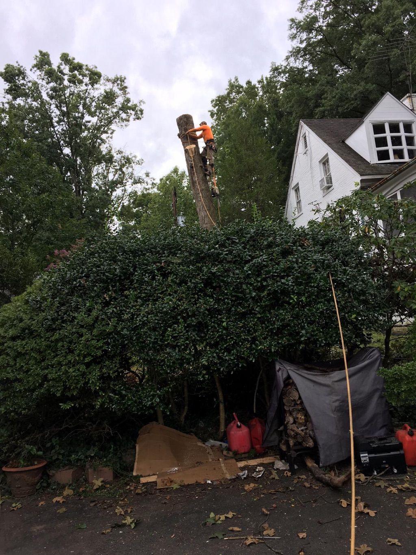 Orellana landscaping & Tree services LLC