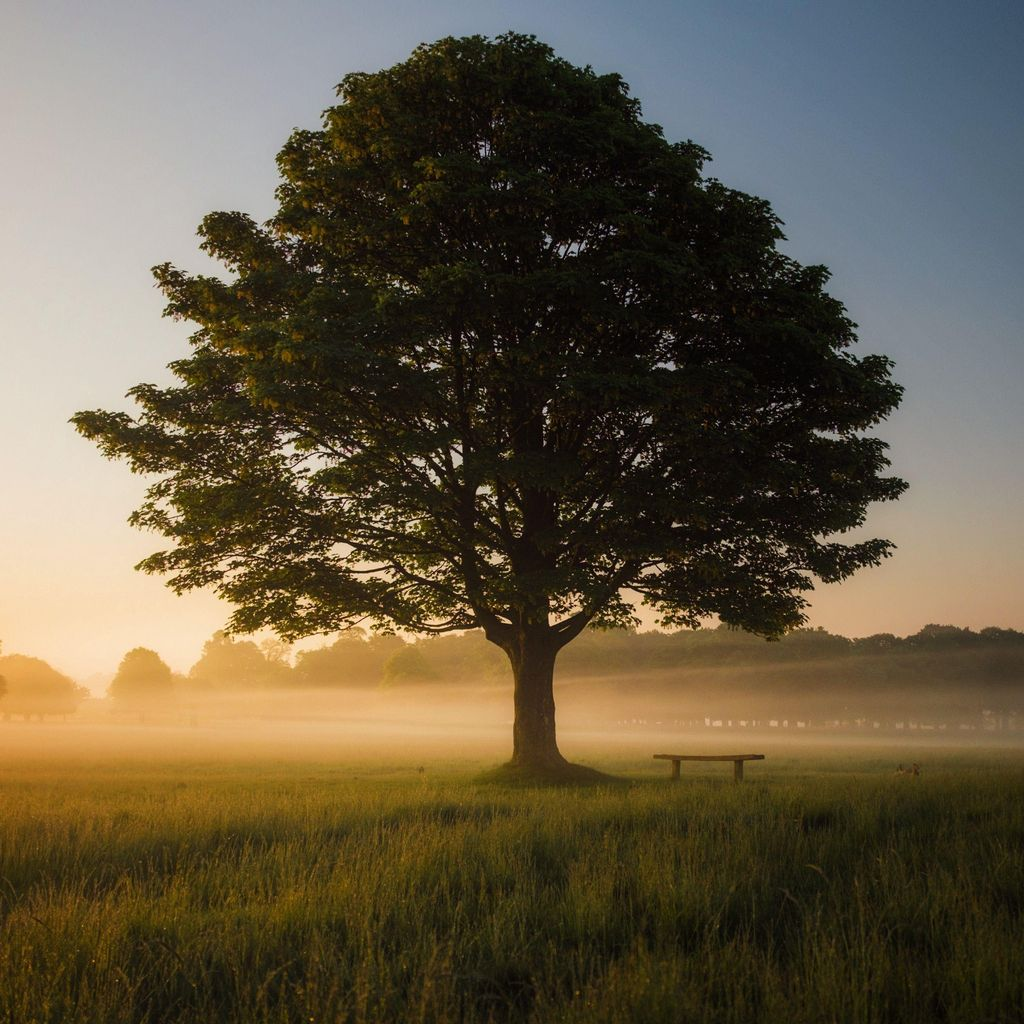Best Quality Tree and lawn Services
