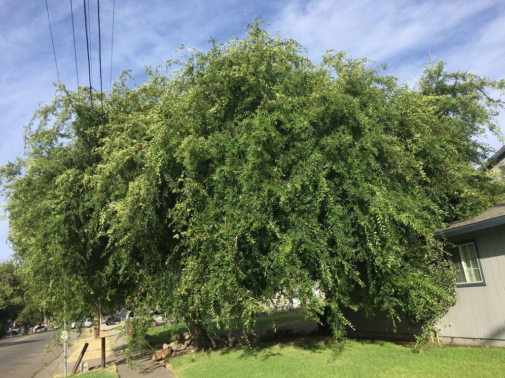 Treet Trimming