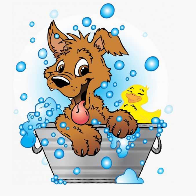 Az Dog Grooming