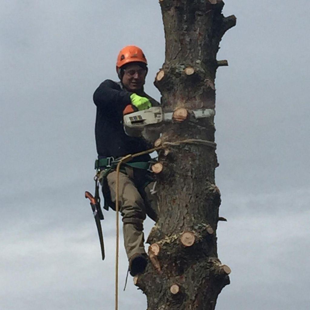 Castillo Tree Service & Lawn Care LLC