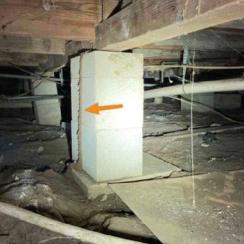Subterranean termite mud tunnel