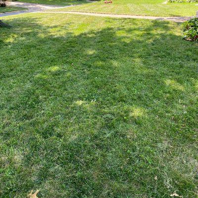 Avatar for A & A Lawn & Maintenance Llc