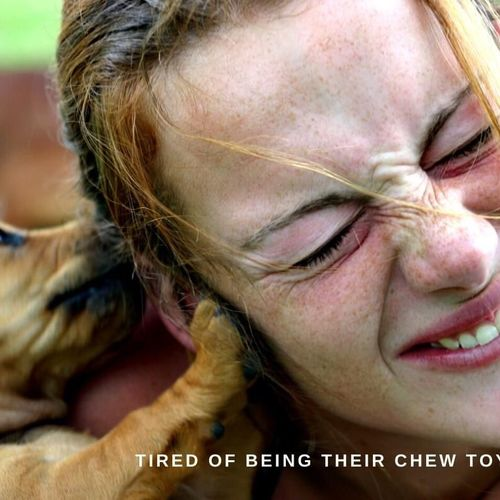 Tired of being their chew toy?