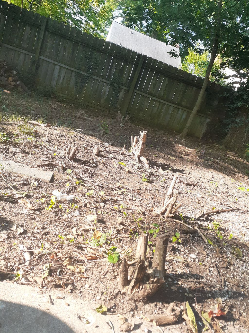Stump Removal & Graden Area Clean Up