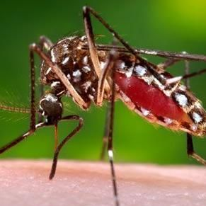 Avatar for ProSight Mosquito Control