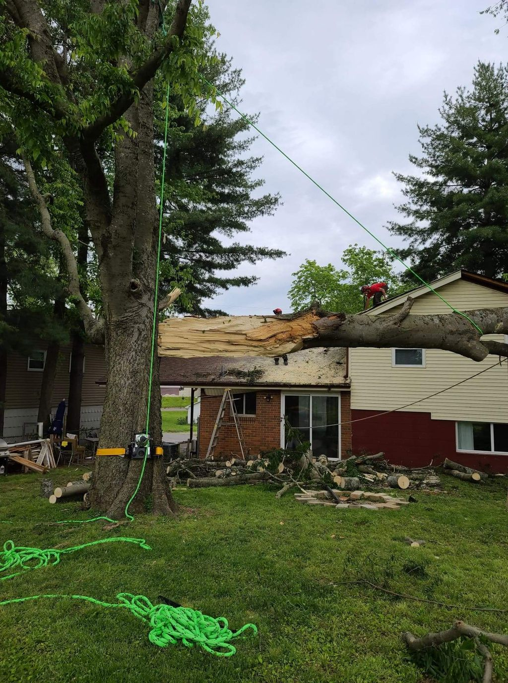 Tree removal after storm