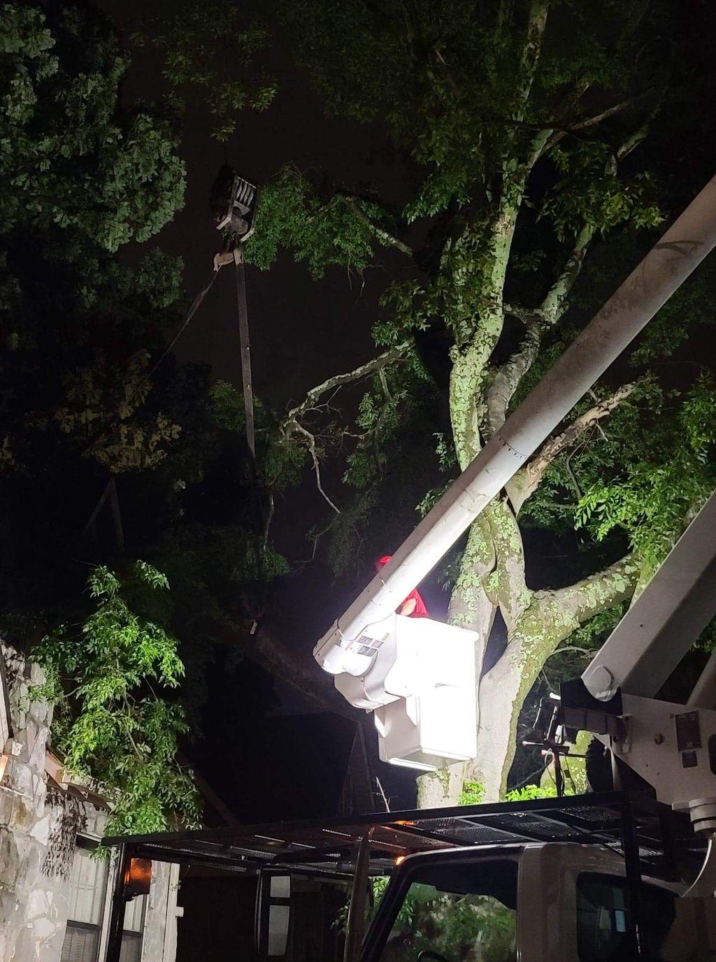 tree removal at night
