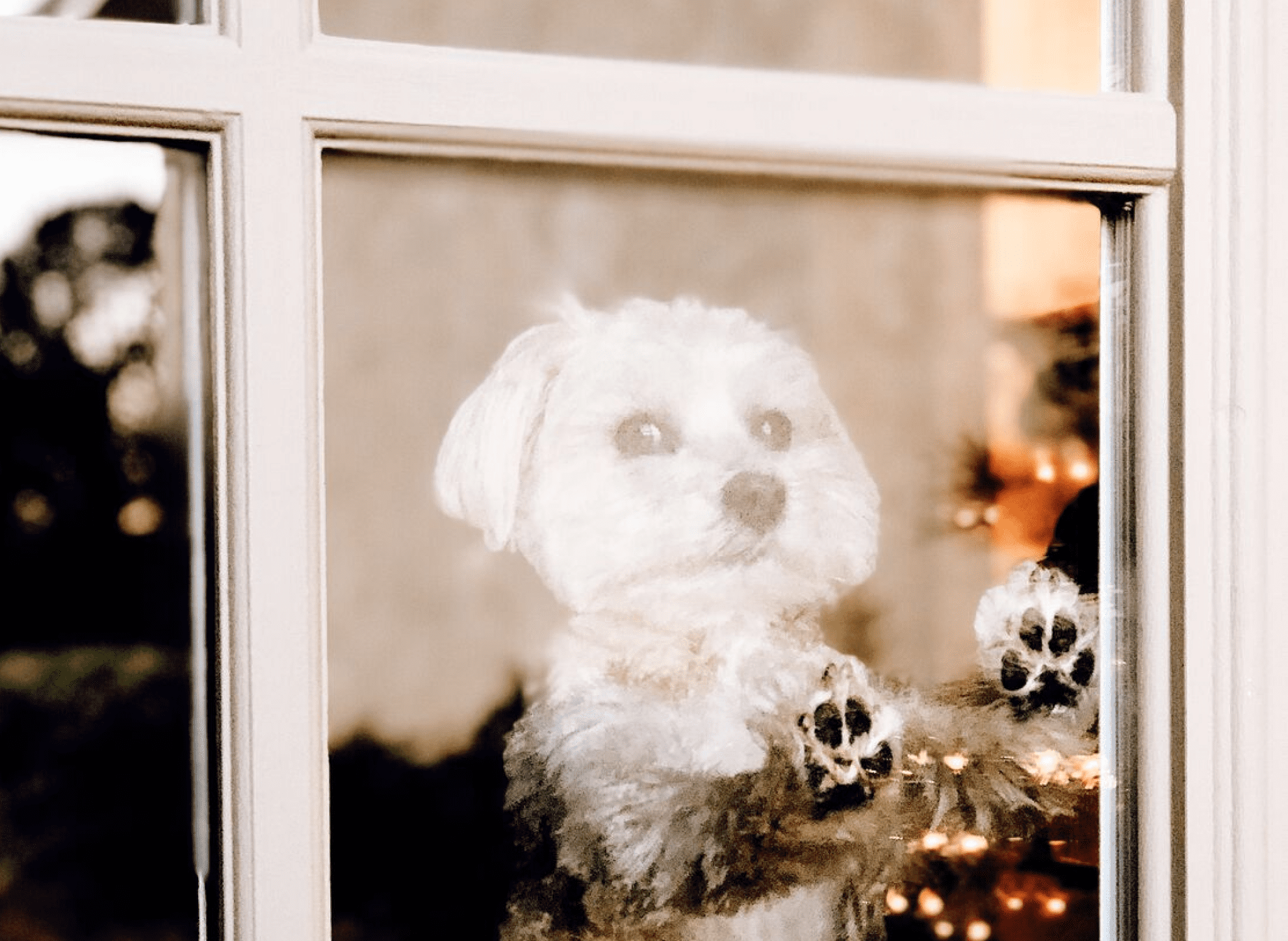 small white dog looking out the window