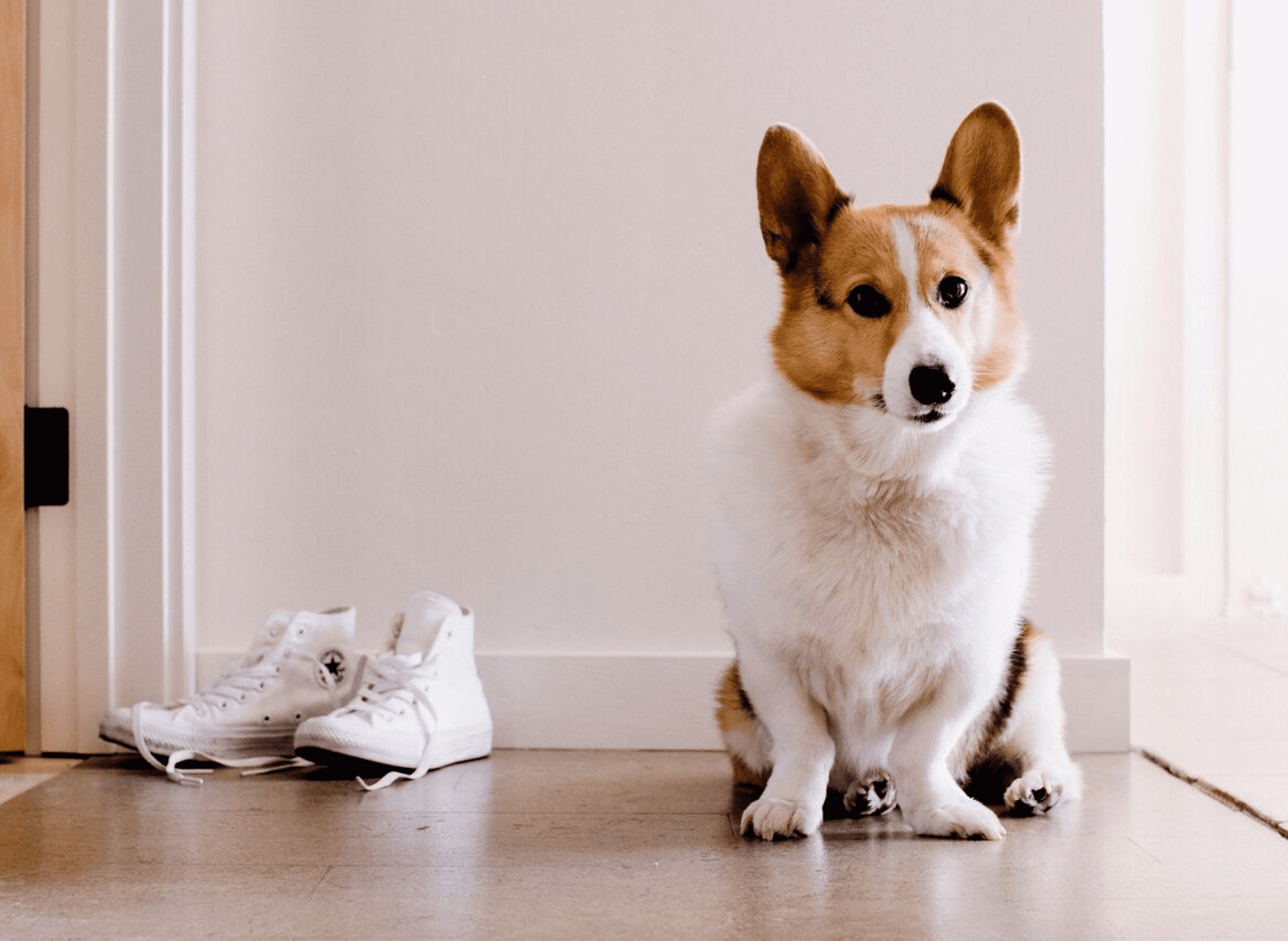 dog sitting by pair of shoes