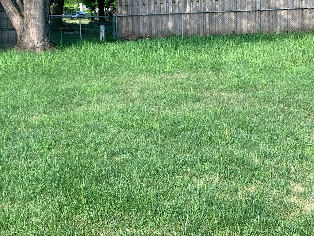 Clean up over grown yard
