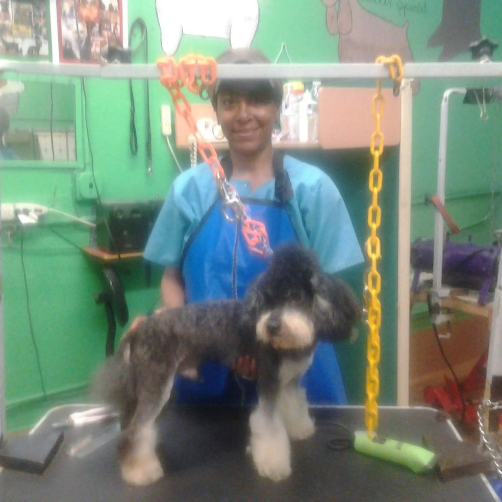 DOG GROOMING PRIVATE PERSONAL PAMPERING By PEBBLES