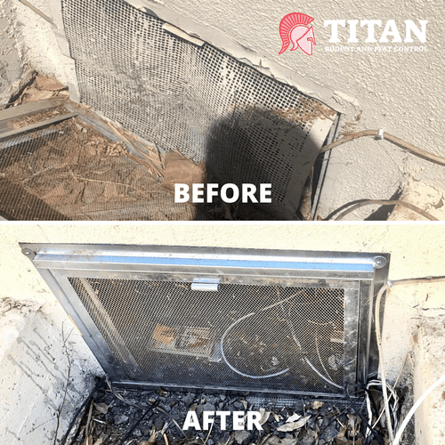 Before & After Rodent Proofing
