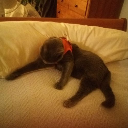 """While babysitting in my house, one of my """"clients"""" makes herself right at home on my bed."""
