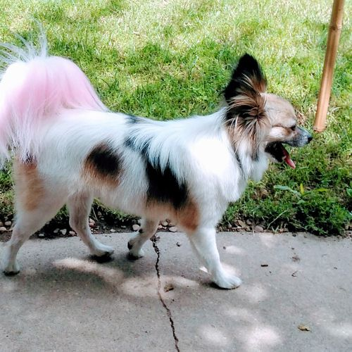 You have to love the pink tail