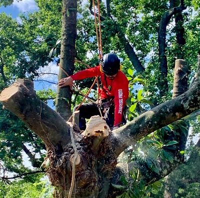 Avatar for Guzman Brothers Tree Services, LLC